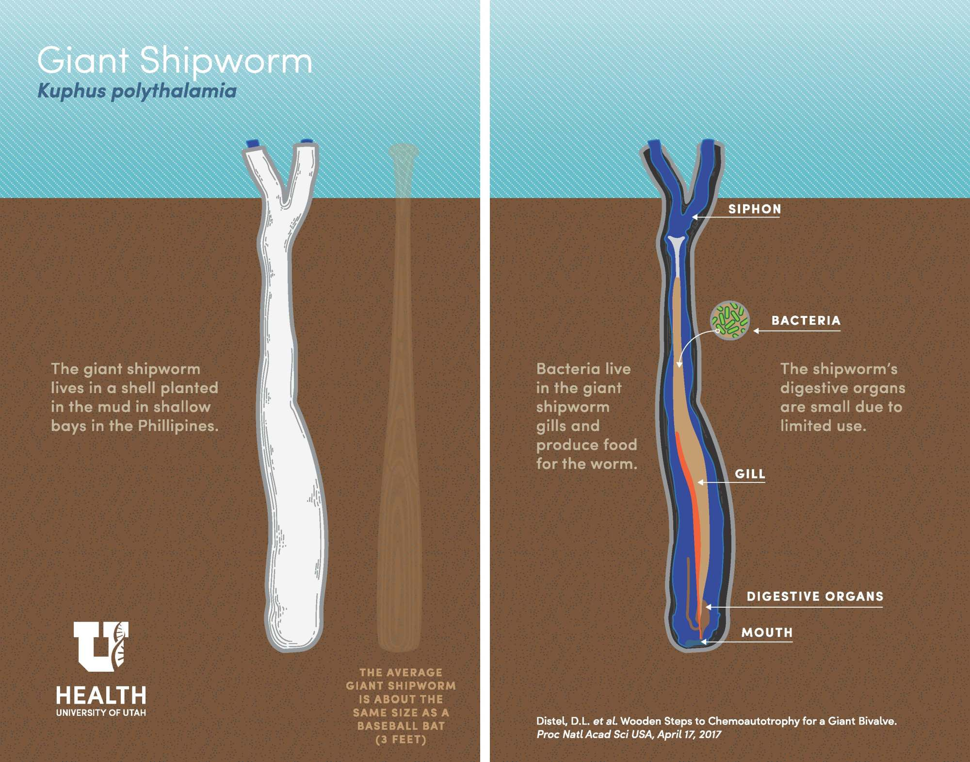 hight resolution of science worm diagram