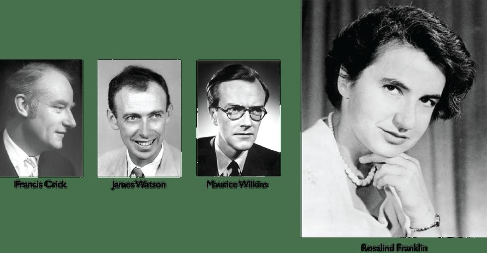 Hasil gambar untuk wilkins crick watson