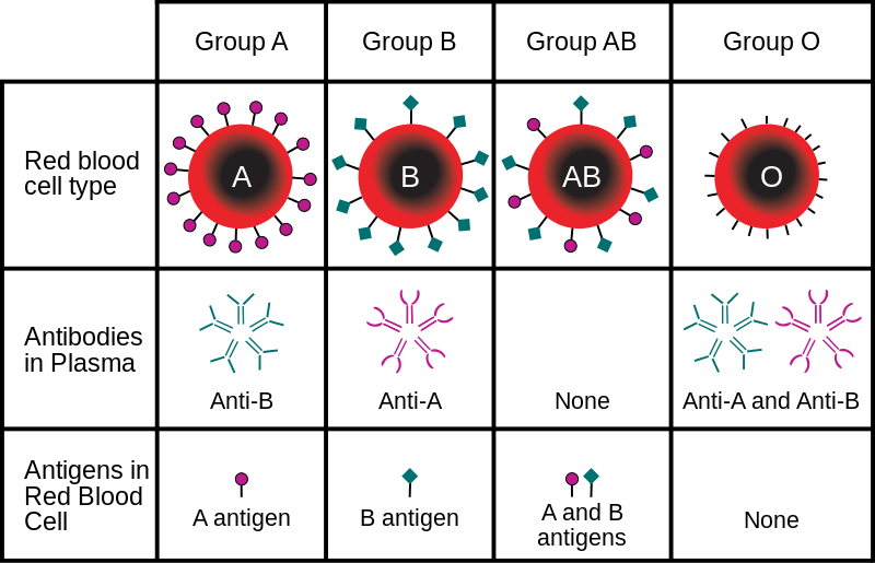 Why We Have Different Blood Types - Big Think