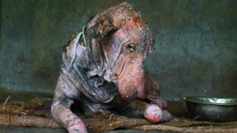 Image result for starving dog