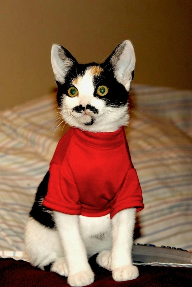 The Morning Funnies Penelope Scotland  Mustache Cat  PAPER