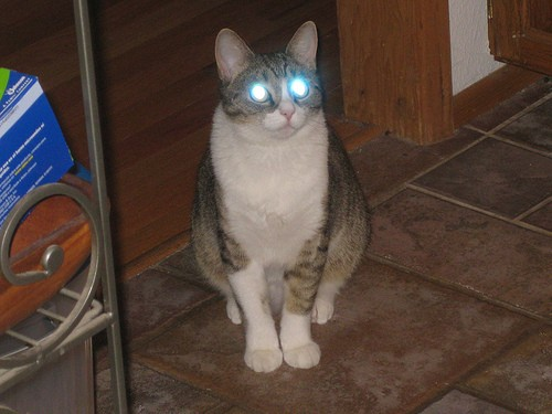 Staring Cats With Laser Beam Eyes Love Meow