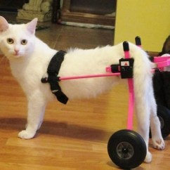 Wheelchair For Cats Daniel Paul Chairs Yoga The Cat Truly Special Love Meow Share Using Facebook