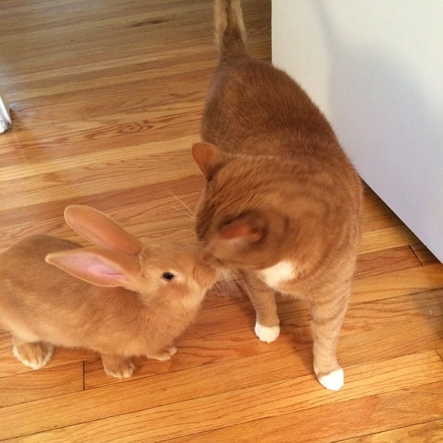 Family Gives Their Ginger Cat an Unlikely Friend and They