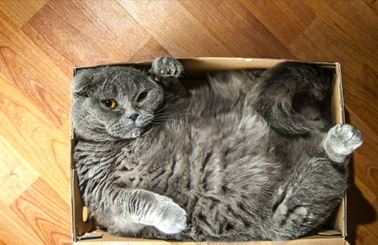Image result for cat in a box