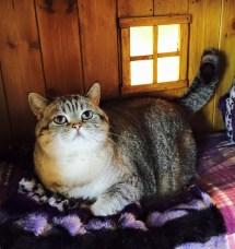 Luxury Cat Hotel Dreamed Of