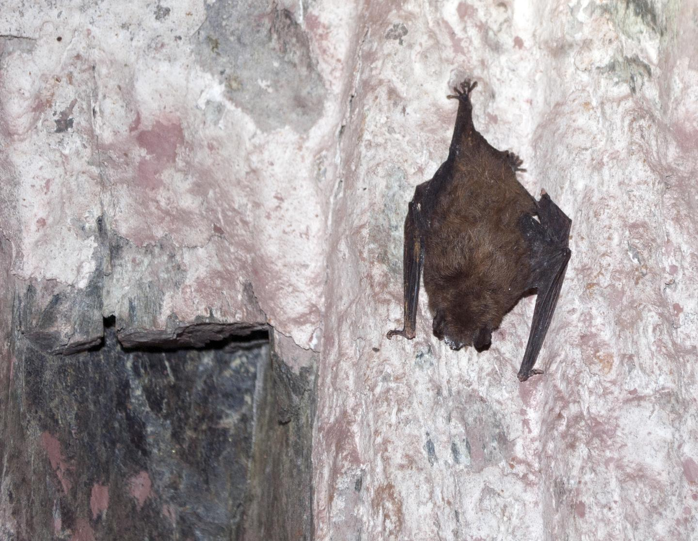 A Fatal Disease Is Ravaging Americas Bats  RealClearScience