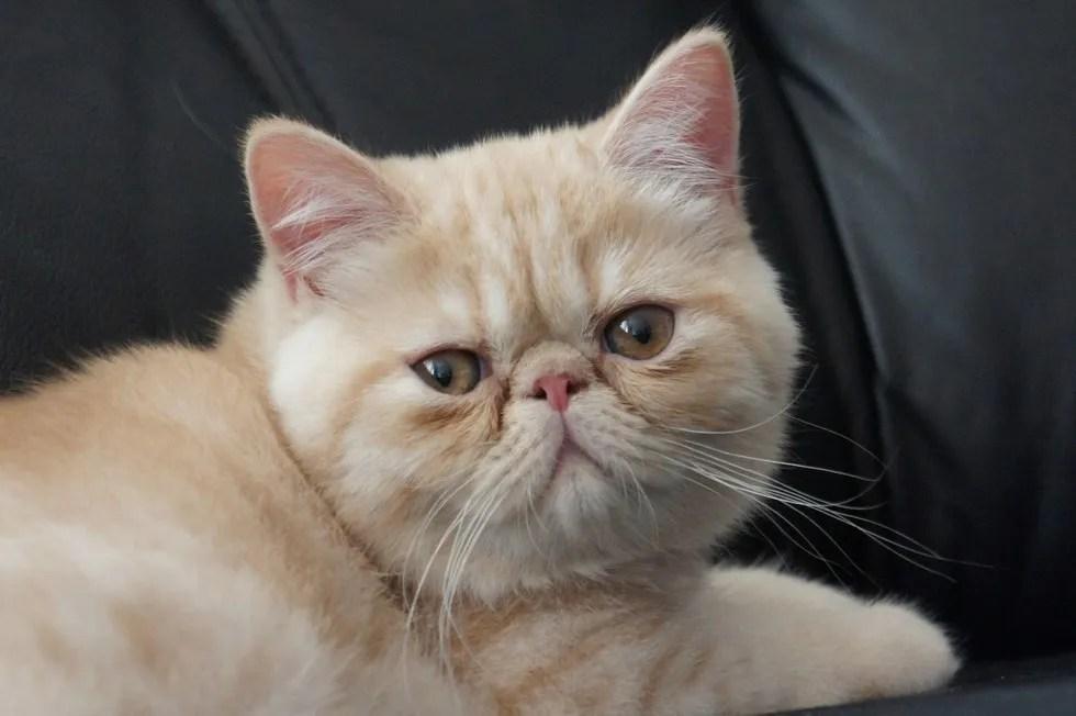 top 10 cutest cat