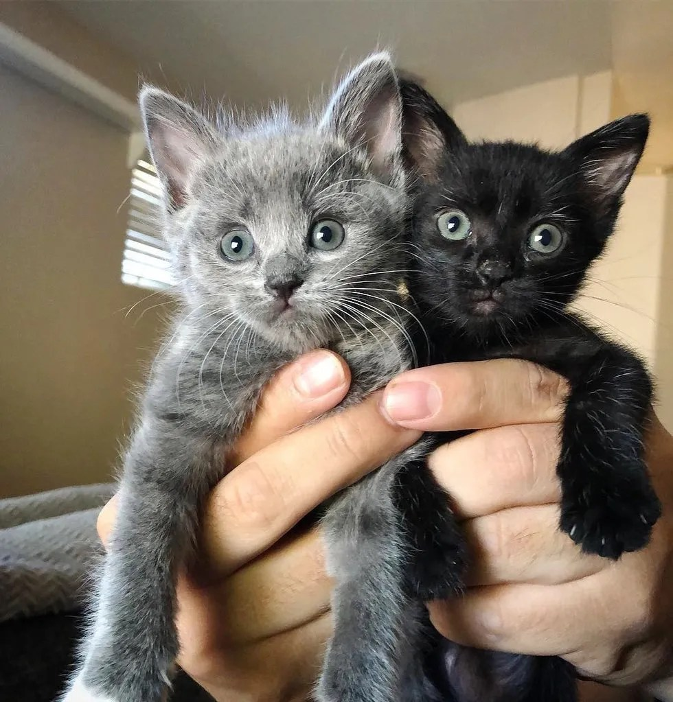 kitten clings to her