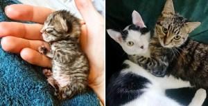 Una gatita se recupera de ser tan pequeña y se convierte en la amiga más dulce de un gatito tuerto