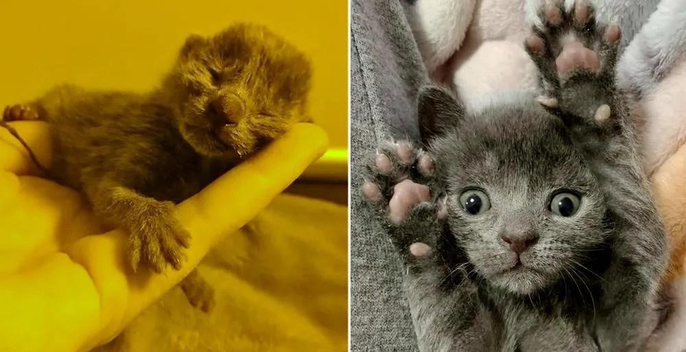 Gatito abandonado sobrevive gracias a la amabilidad de las personas