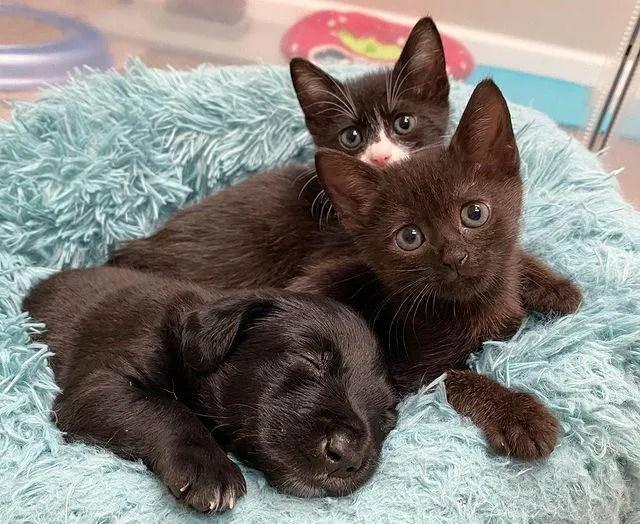 cachorros y gatos, dulces amigos