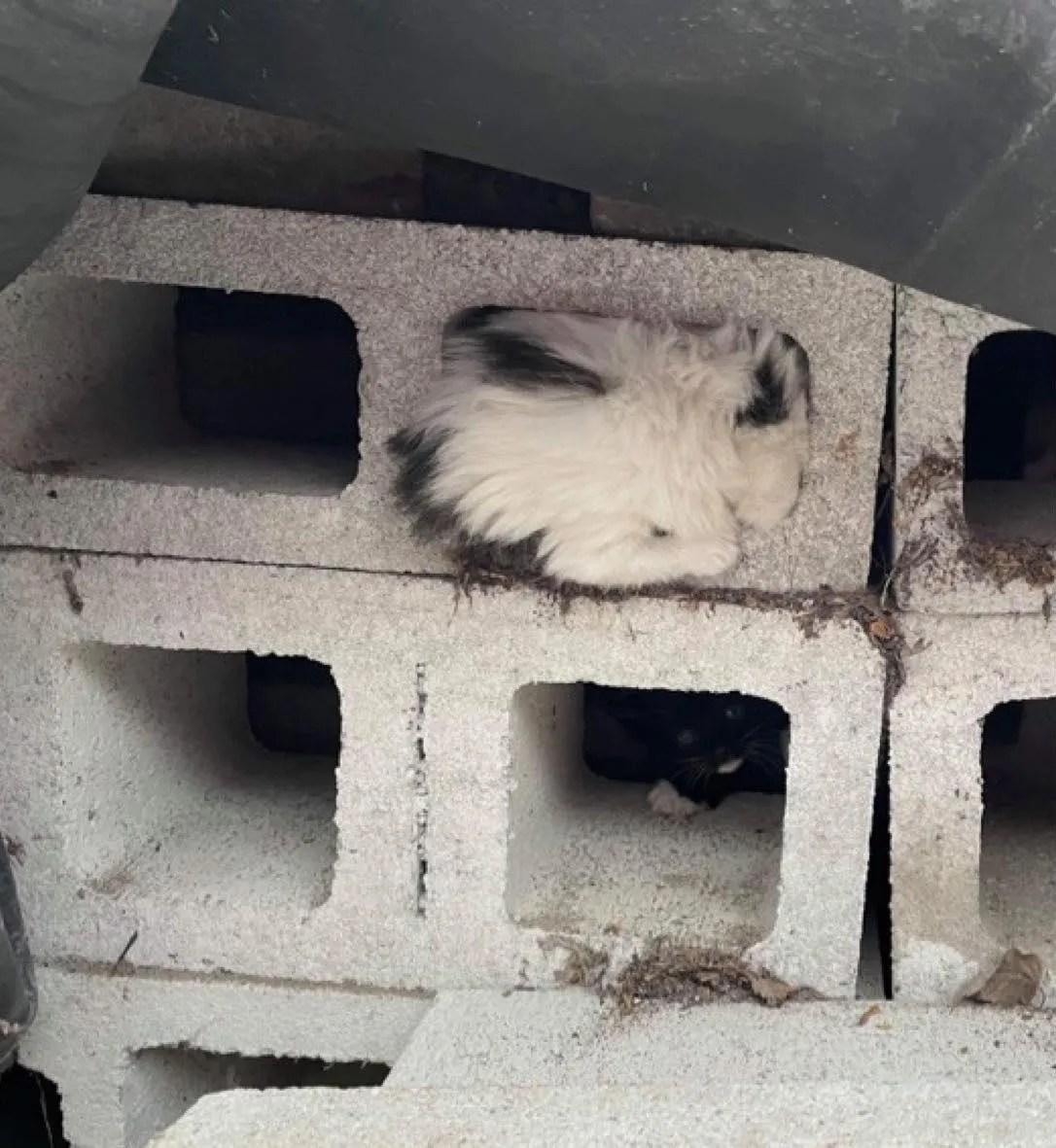 cinder block kitten