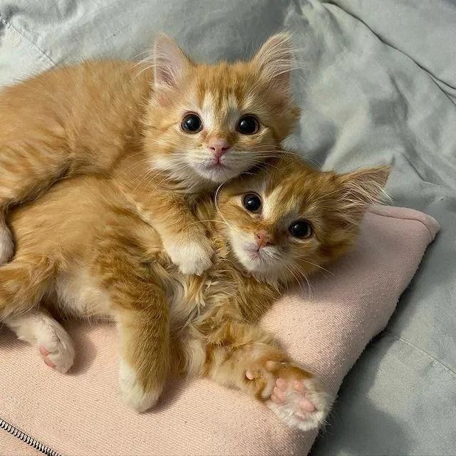feline siblings