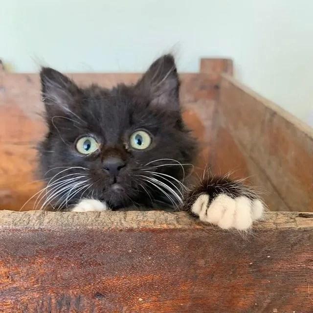 gatito peekaboo