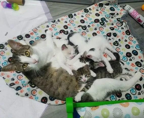 mãe gata e gatinhos fofinhos