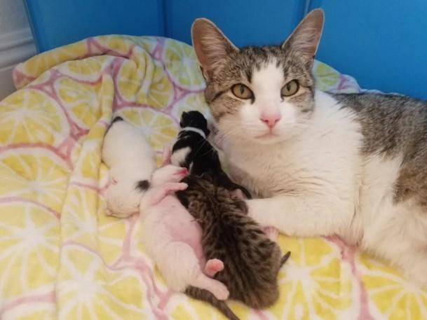 gato e gatinhos