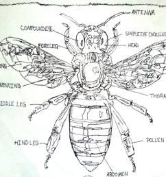labeled diagram of the honey bee drawing by pamela starr saatchi art bee movie plot diagram [ 1920 x 1616 Pixel ]