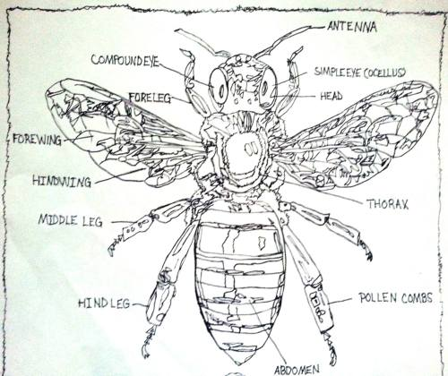 small resolution of labeled diagram of the honey bee drawing by pamela starr saatchi art bee movie plot diagram