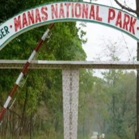 Manas National Park (Royal Tiger Reserve) - Wildlife Sanctuary, Places to Stay, Best Time to Visit & How to Reach; Sentinel Assam