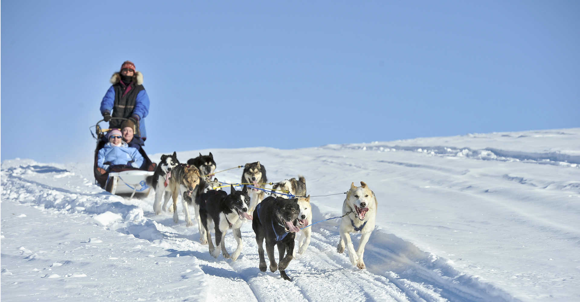Alaska State Dog Worksheet