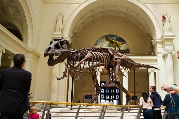 Field Museum In Chicago Find Natural History Exhibits