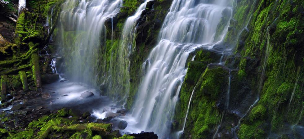 Fall Dog Wallpaper Proxy Waterfall Eugene Cascades Amp Oregon Coast