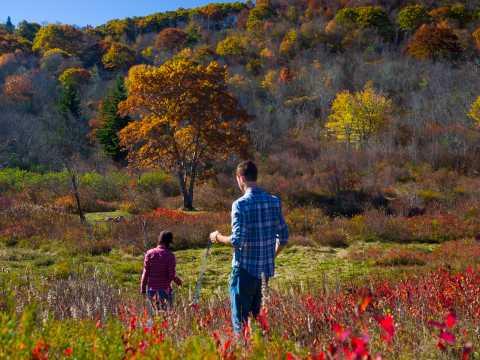 asheville 2019 fall color