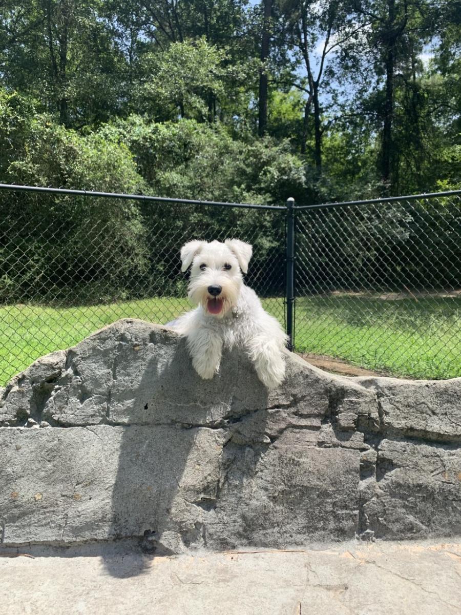 What Do U Call A Dog With No Legs : Parks, Woodlands