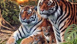 Imagini pentru tigri