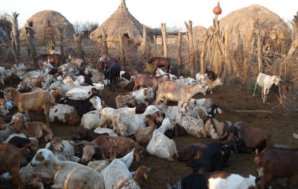 Security forces are confiscating cattle and forcibly evicting Lower Omo tribes.