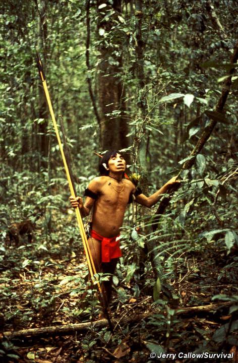 Yanomami hunter in the Venezuelan rainforest. © JERRY CALLOW/SURVIVAL