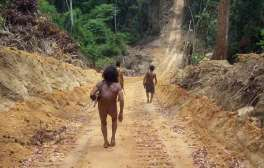 Un uomo Awá lungo una strada aperta dai disboscatori.