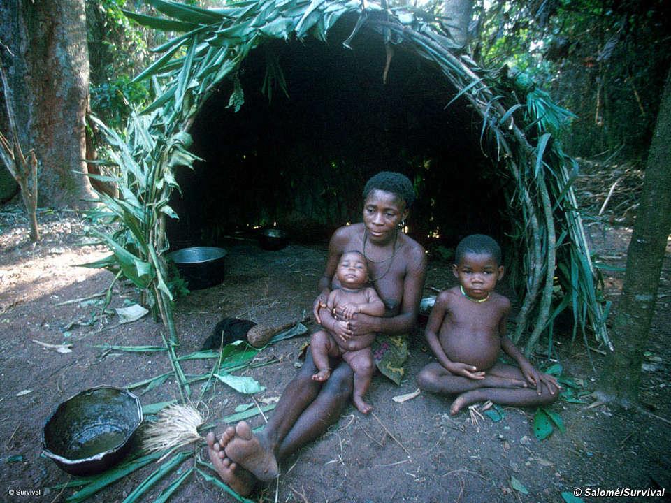 pygmies survival international
