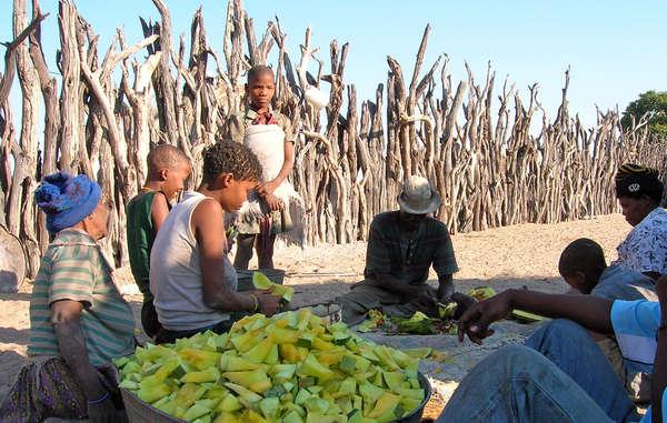 Muchos bosquimanos se ven abocados a depender del líquido de los melones para hidratarse ante la falta de acceso a pozos en su tierra ancestral.