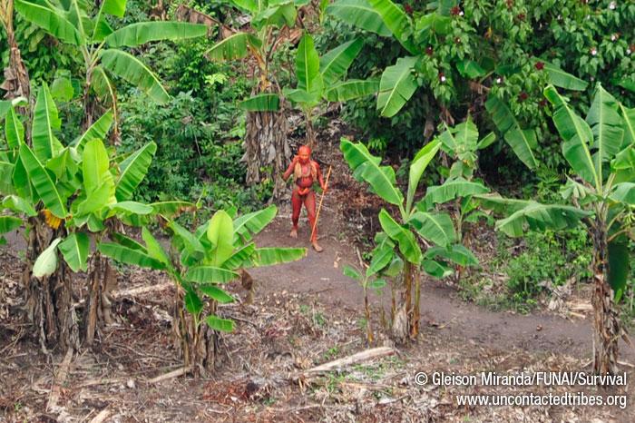 Este hombre pintado con bija (tinte de semillas de annato) está en la huerta de la comunidad, rodeado de palmeras.