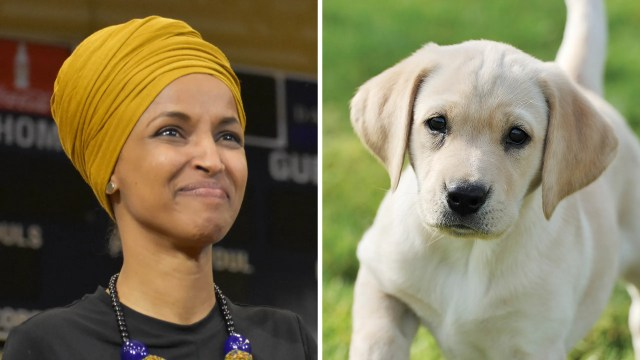 Sidebyside images of Ilhan Omar and a small yellow lab puppy