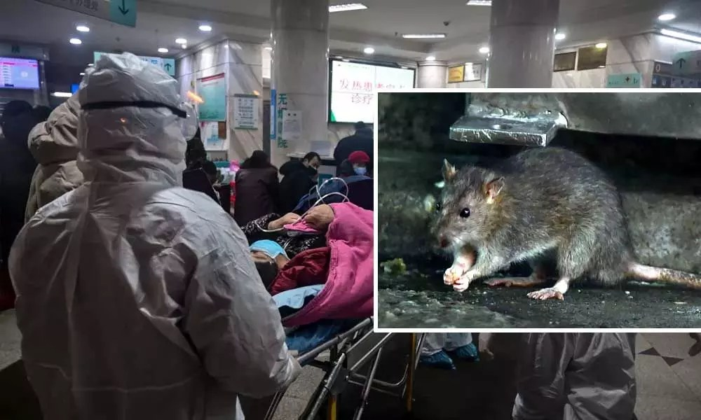 After Coronavirus, hantavirus surfaces in China, one reported dead