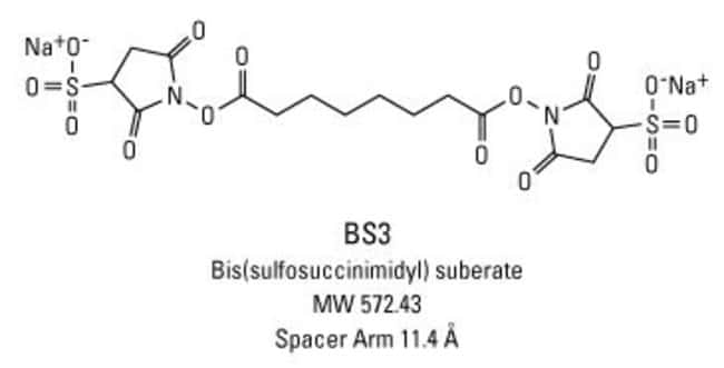 BS3 (bis(sulfosuccinimidyl)suberate)