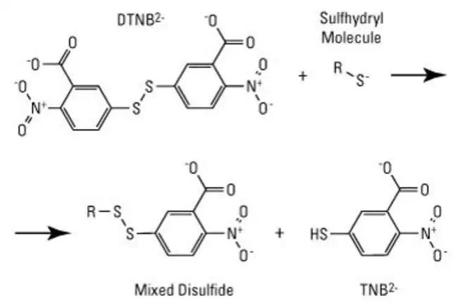 DTNB (Ellman's Reagent) (5,5-dithio-bis-(2-nitrobenzoic