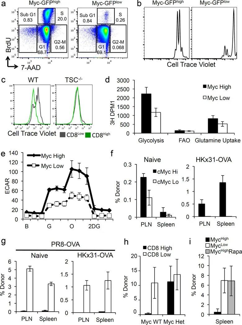 CD8a Antibody, PerCP-eFluor™ 710 (Monoclonal, 53-6.7)