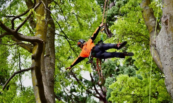 Tree climbing – the greatest sport you've never heard of