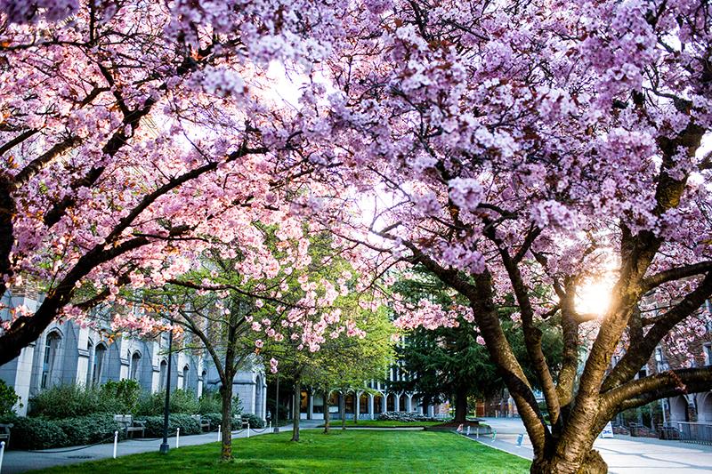University of Washington-Seattle Campus: #13 in MONEY's 2017-18 Best Colleges Ranking