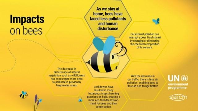 2020 UNEP infographic