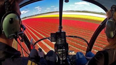 Sightseeing in a Heli Holland Hughes 269C over tulip fields of the Noordoostpolder