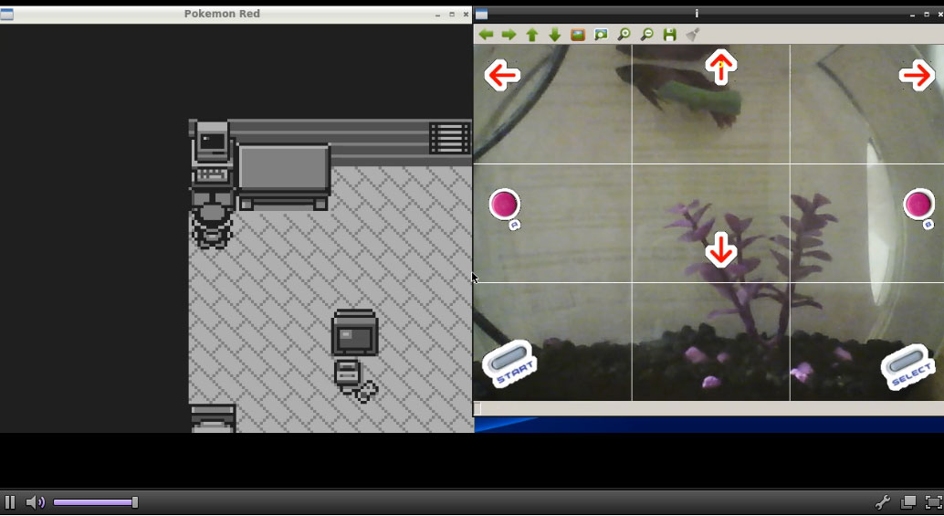 FishPlaysPokemon Is A Real Fish Playing Pokemon On Twitch VG247
