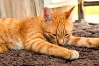 new carpet allergy symptoms  Floor Matttroy