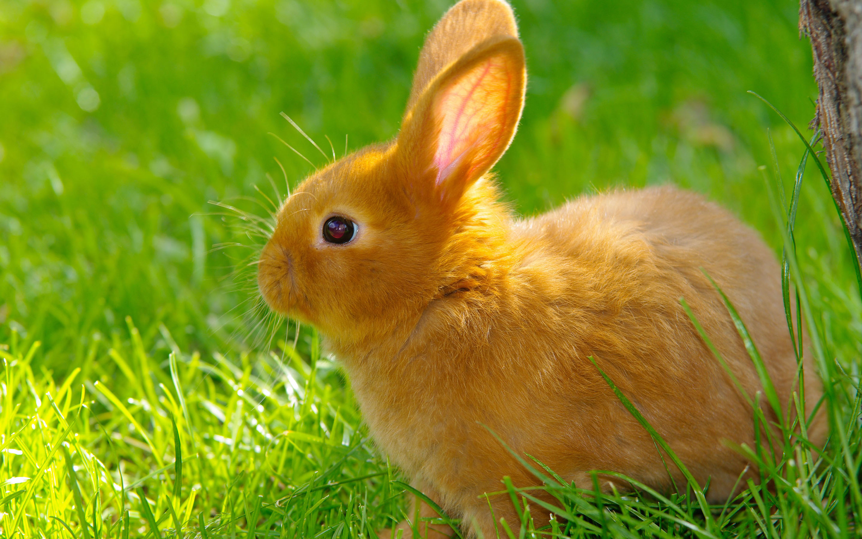 Free for commercial use high quality images Download Cute Baby Rabbits Wallpapers Gallery