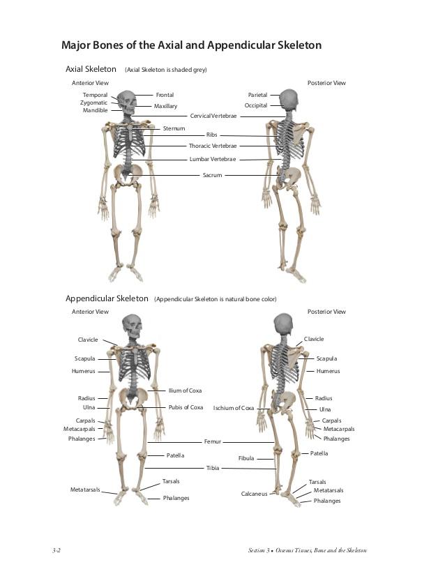 Atlas of Anatomy for Allied Health • bluedoor Publishing