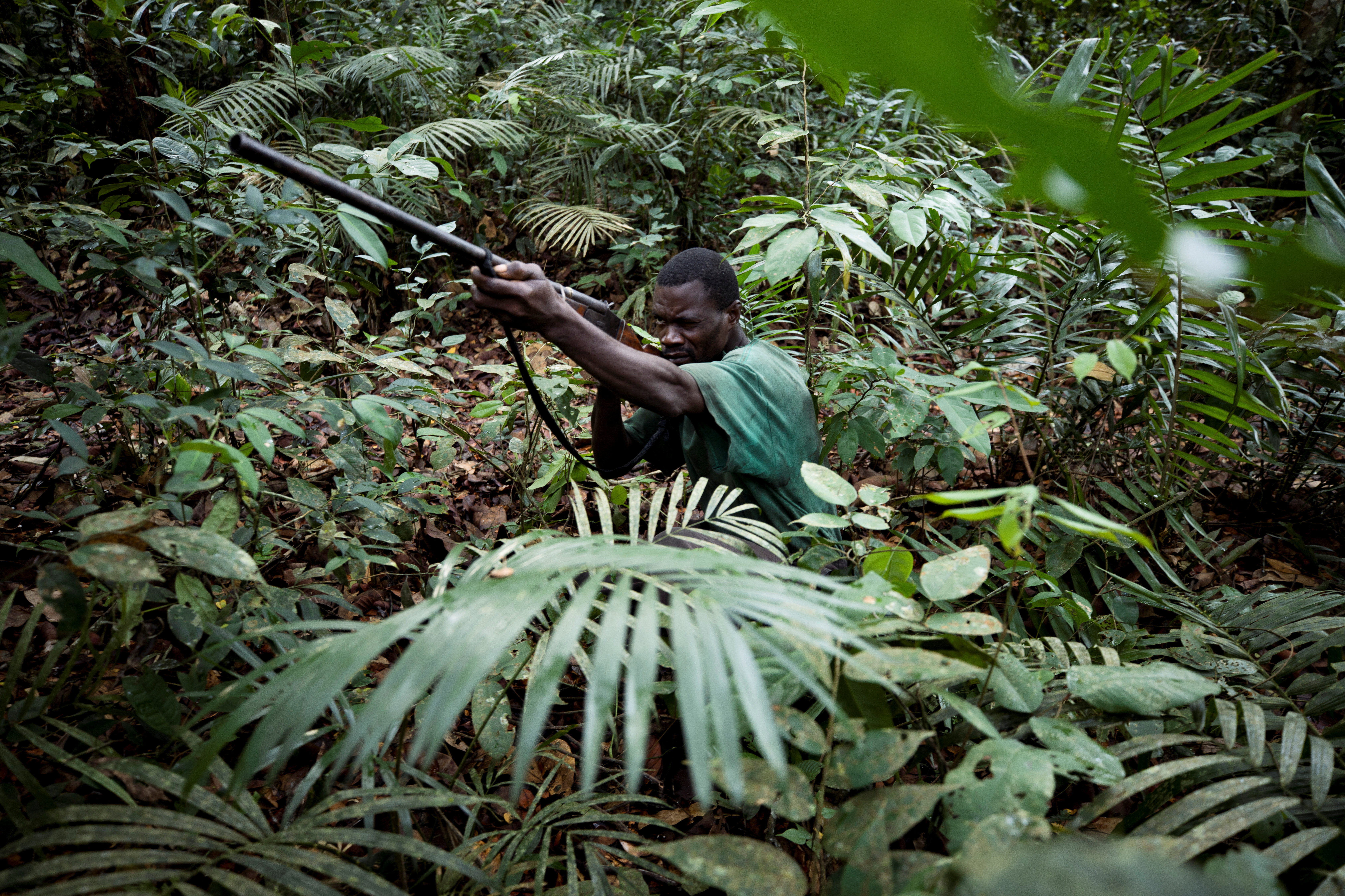 And without a replenishment of soil moisture, the dry season is ending later, which postpones the start of the next wet season and hinders vegetation regrowth. Hunters From The Congo Are Illegally Poaching Bush Meat To Feed Their Families In Hard Times World Economic Forum